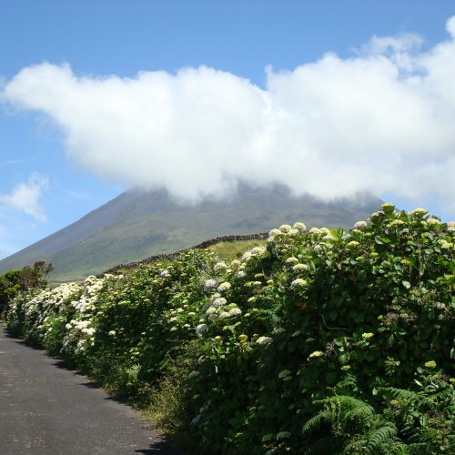 corporate events islands azores workation team travel teambuilding pico sao miguel